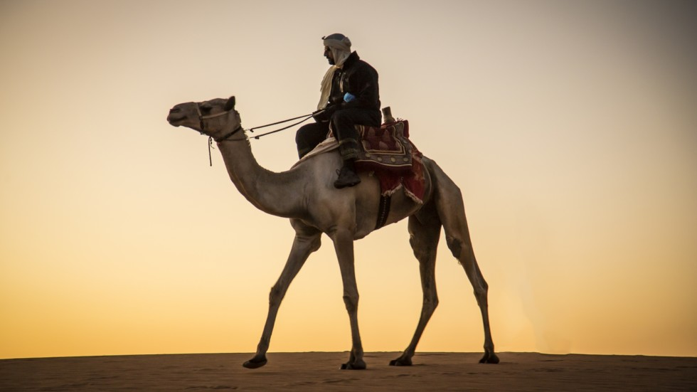 Man with a camel in a desert in Sudan