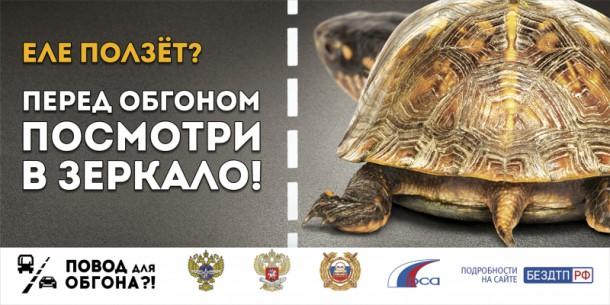 01-turtle-3x6-800x600_mainPhoto