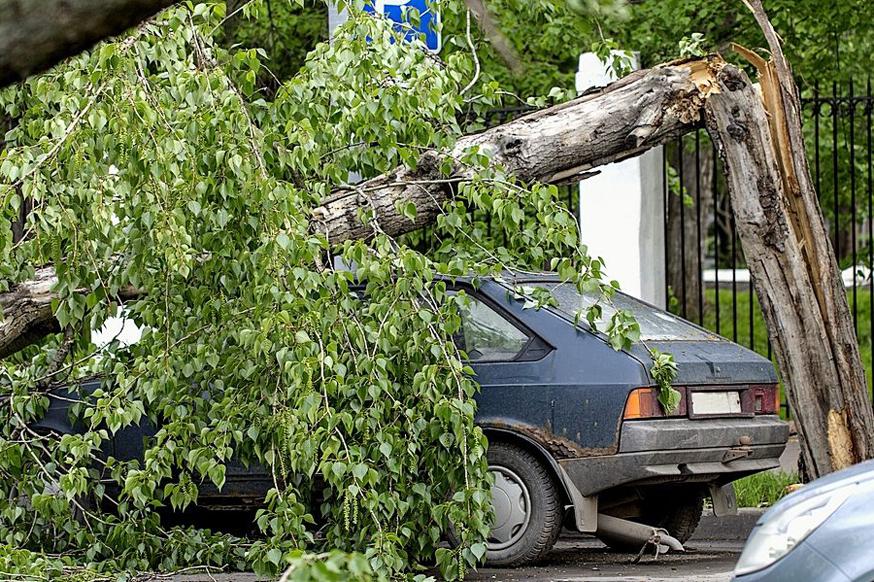 На автомобиль упало дерево: суд объяснил, что делать