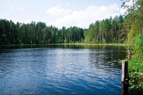 Лесное озеро где находится