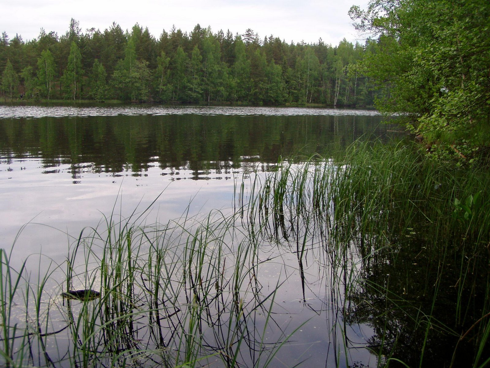 отдых с рыбалкой шашлыком с ленинградской области